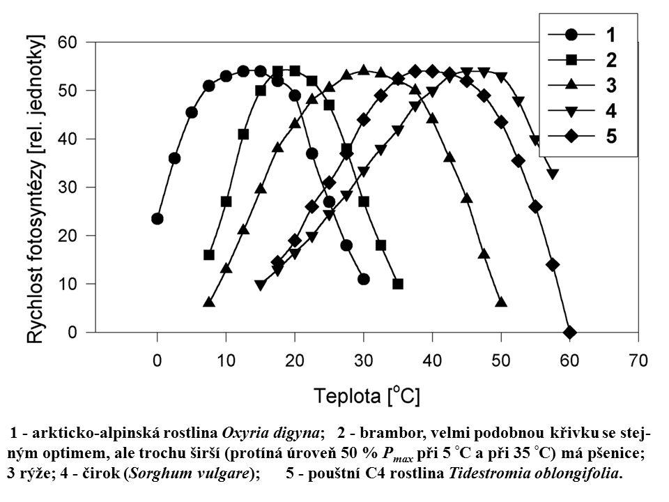 vyšší cévnaté rostliny: 1 ‑ arkticko-alpinská rostlina Oxyria digyna; 2 ‑ brambor, velmi podobnou křivku se stejným optimem, ale trochu širší (protíná úroveň 50 % Pmax při 5 °C a při 35 °C) má pšenice; 3 rýže; 4 ‑ čirok (Sorghum vulgare); 5 ‑ pouštní C4 rostlina Tidestromia oblongifolia.[IS1] Stránka: 1 [IS1] zdroje křivek: A 1a 5 LAP (=Larcher , překlad) str. 152, obr. 3.35; 2 Cooper PPDE str. 401, Fig. 17.3 dodatečně zjištěno, že to není lišejník a přejmenován podle textu k uvedenému obr. z LAP (obr. 3.35); 3, 4 naše výsledky, Ann. Rep. rok str. . B 1 až 5 LAP výše citovaný